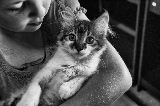 děvče s kočkou