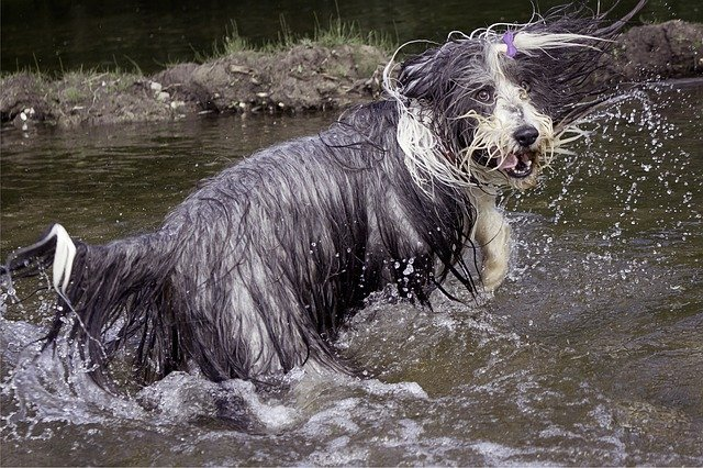 bláznivý pes v řece