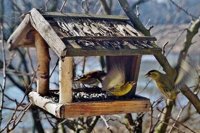 ptáci a krmítko