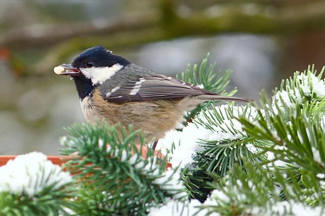 ptáček na větvi