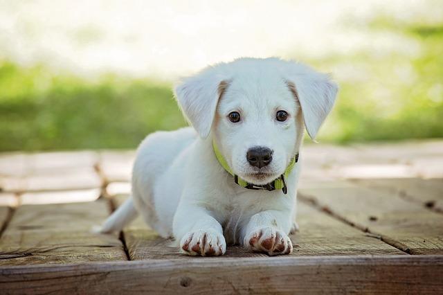 rozkošný pes.jpg