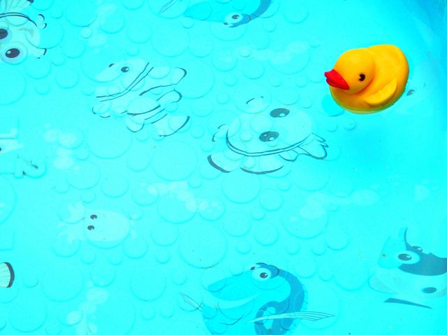 bazén s kachničkou